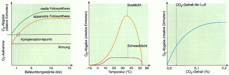 Abhängigkeit der Photosyntheserate von Außenfaktoren ...