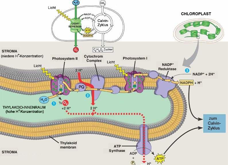 unterricht vektoren biologie